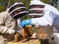 Biodlarmöte i Ekebyhovsparken