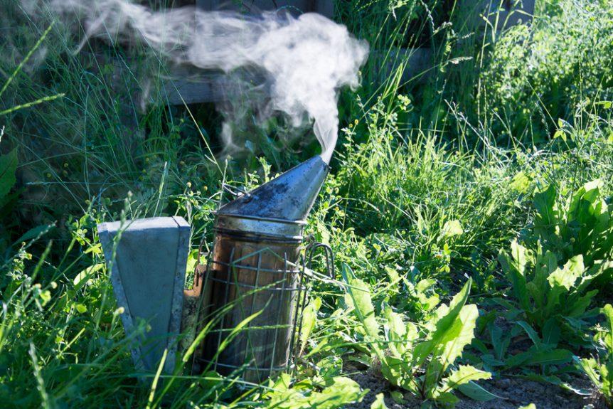 Rökpust biodling på Mälaröarna. Foto: Mats Andersson, Stenhamra www.bubbelbubbel.se