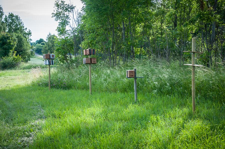 Apideor på Mälaröbiodlarnas parningsplats för Carnica-bin på Munsö, Ekerö